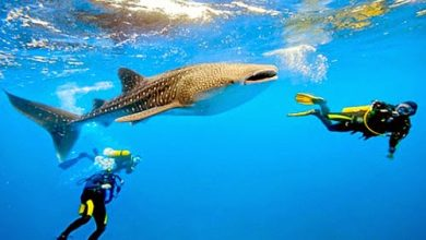 Photo of Travel show picks PH as most popular diving destination