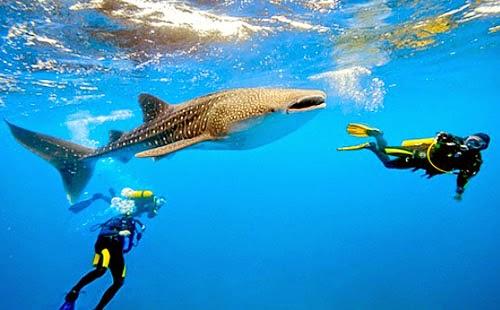 Travel show picks PH as most popular diving destination