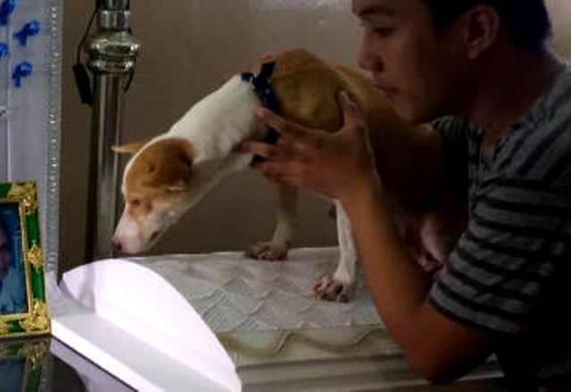 Davao's Hachiko: Even after death, dog faithfully waits for master