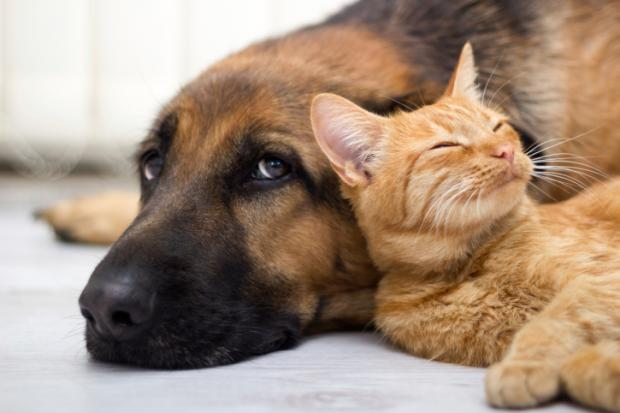Study says cats do not need owners as dogs do
