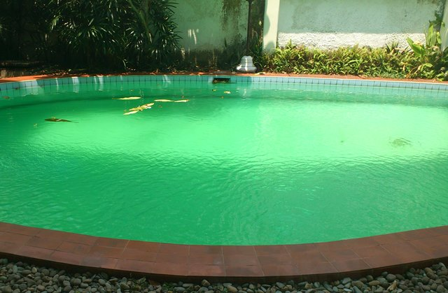 Health experts: swimming in dirty pools main cause of pneumonia in UAE