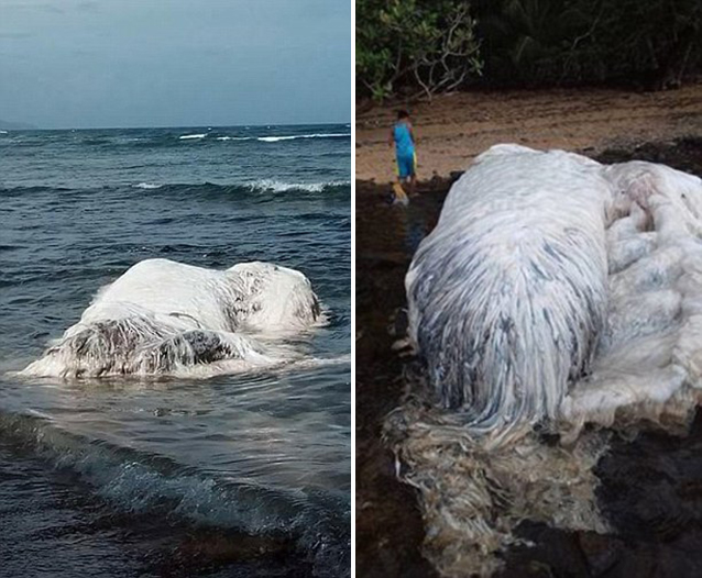 Mysterious white creature found in Philippines