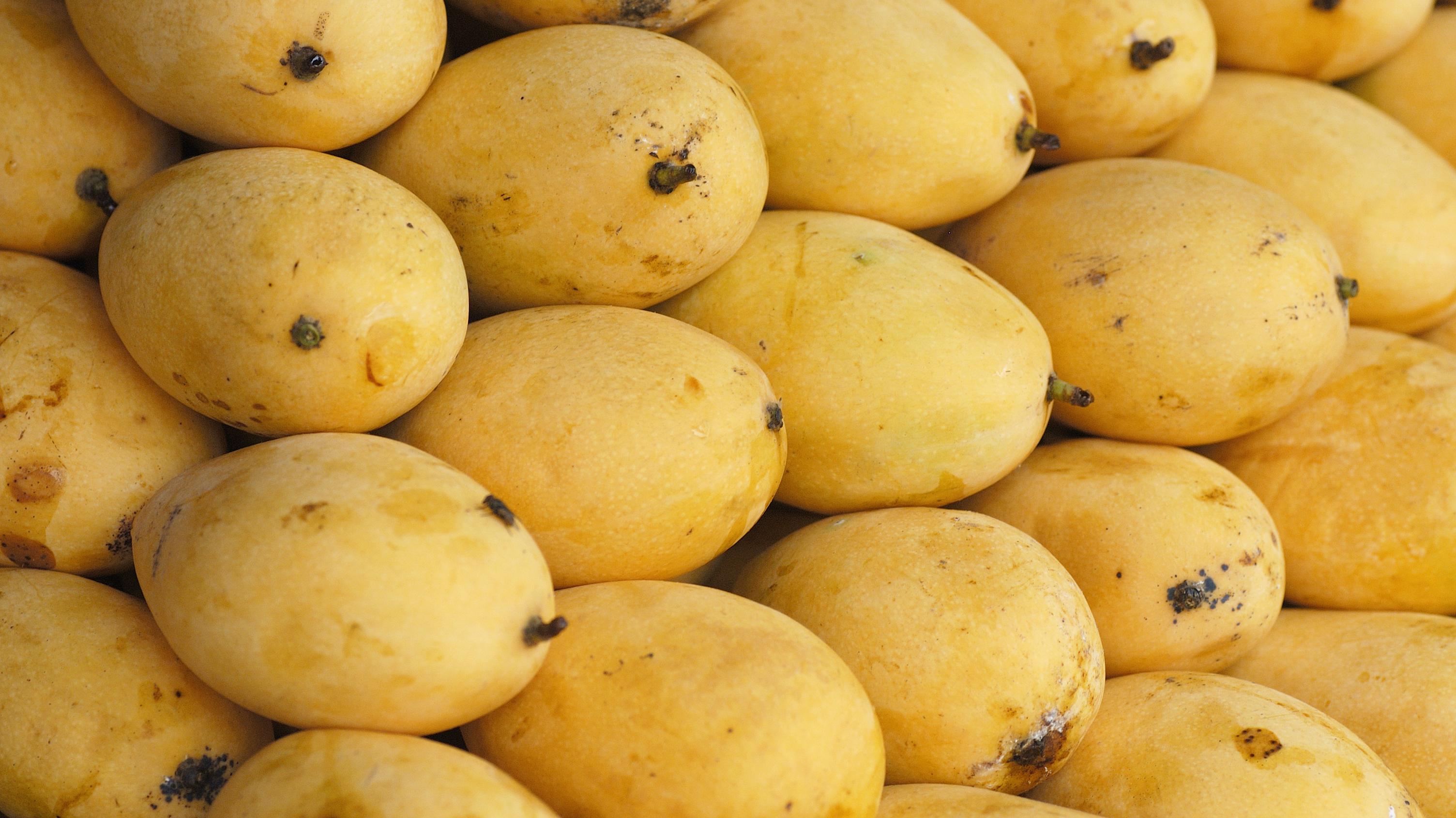 Ph mangoes to star at this year's Gulfood