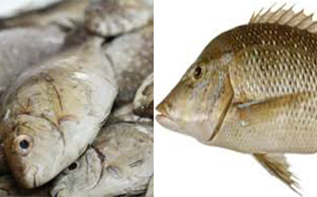 'Sheri' and 'safi' fish off the menu in UAE