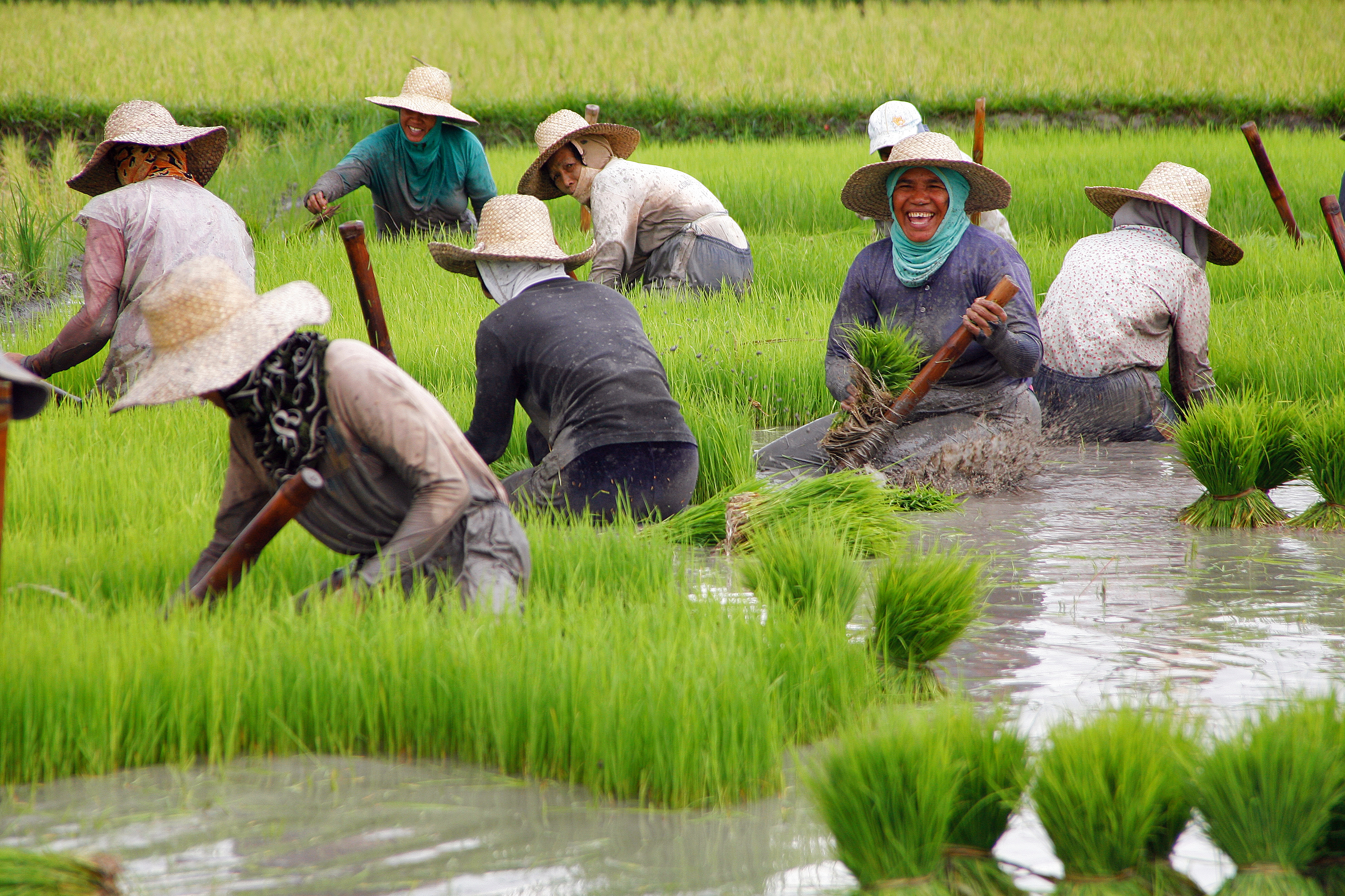Middle East investors to finance agri-business in PH