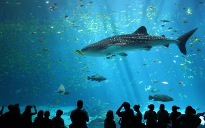 Dubai Aquarium: A window to the living ocean