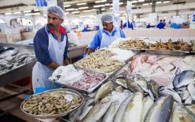 Summer sends fish prices soaring in Abu Dhabi