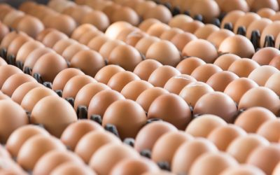 UAE bans poultry, egg imports from this country