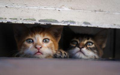 Dubai Municipality rescues 80 stray starving cats