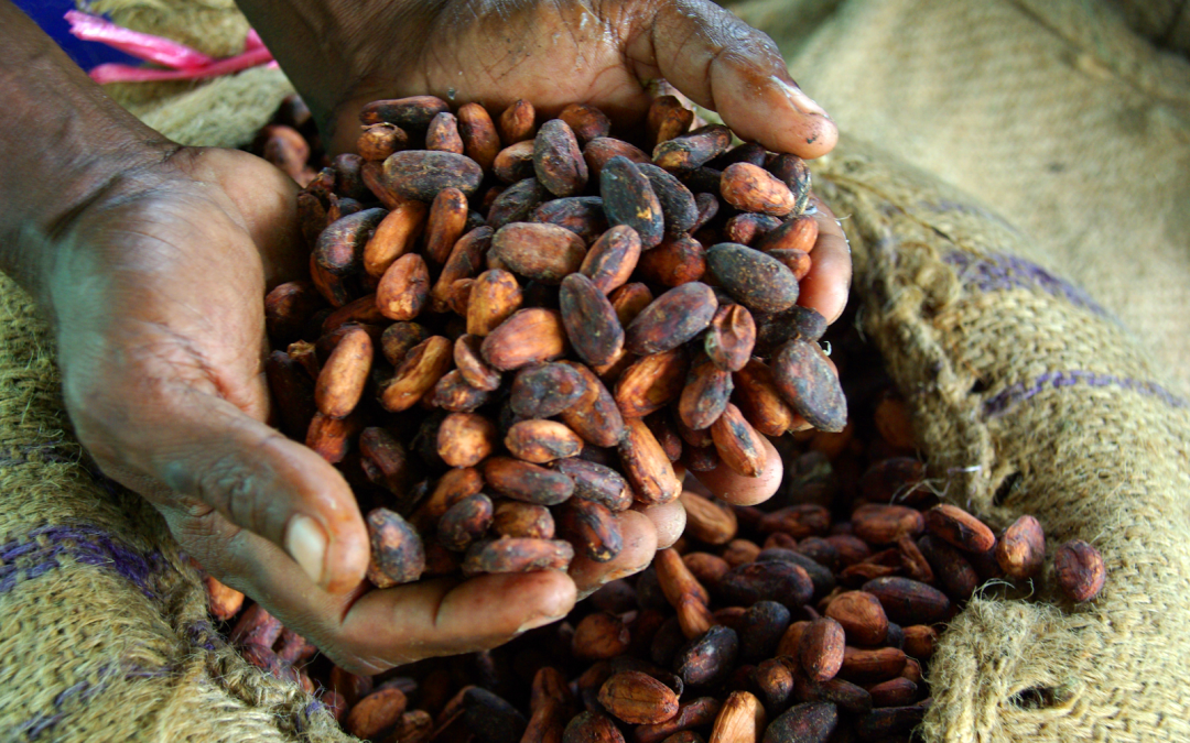 DOLE, DA to launch cacao investment program for OFWs