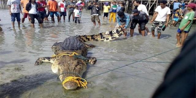 WATCH: 16 ft. crocodile caught in Tawi-Tawi
