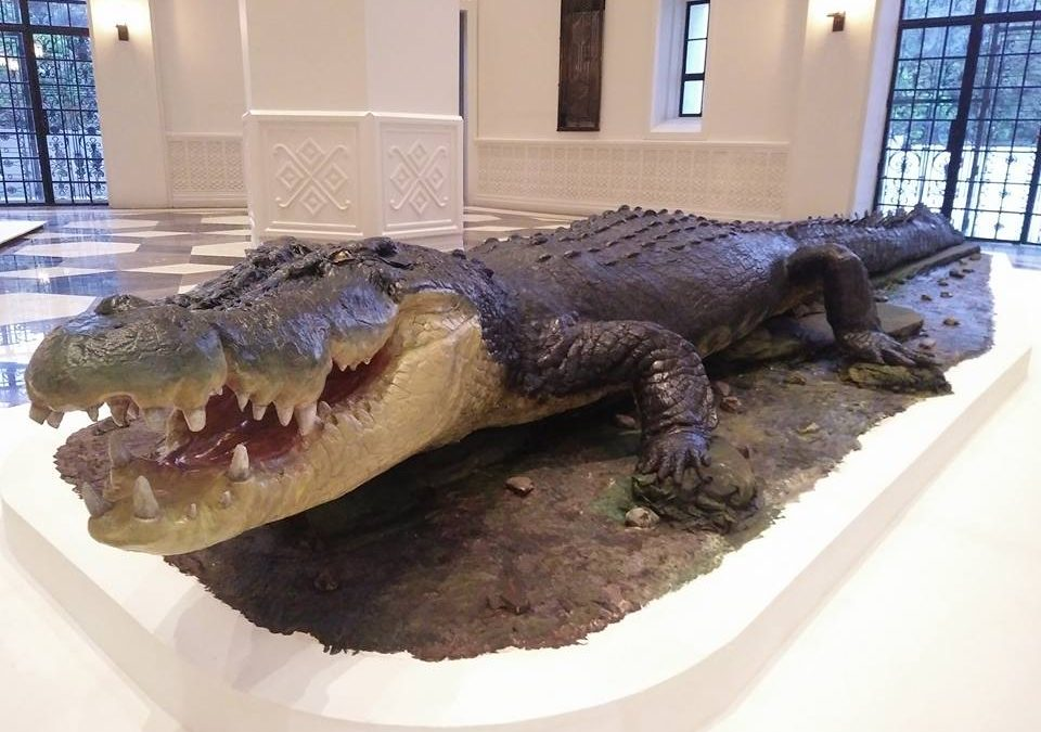 Lolong takes center stage at National Museum of Natural History