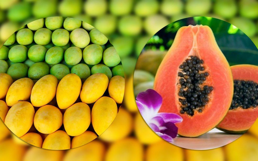 PH's carabao mango invades UAE; papaya products make it to South Korea
