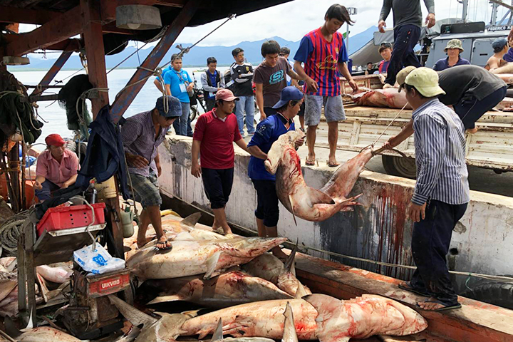 60 endangered species of sharks, manta rays seized from Viet fishers in Palawan