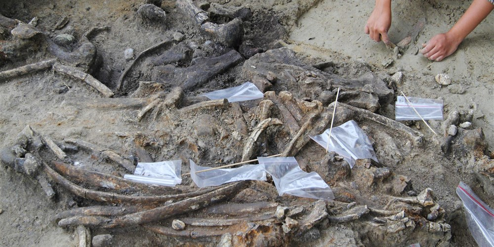 LOOK: Archaeologists unearth rhino skeleton in the Philippines