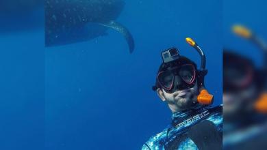 Photo of WATCH: Sheikh Hamdan's underwater adventure with whale sharks