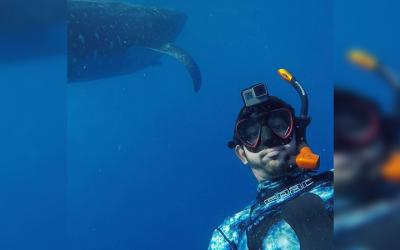 WATCH: Sheikh Hamdan's underwater adventure with whale sharks