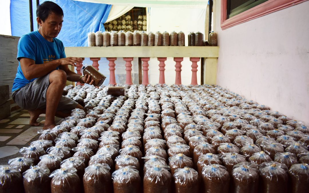 Ex-OFW reaps success in mushroom farming business