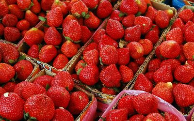 Baguio strawberries to be made available in Dubai