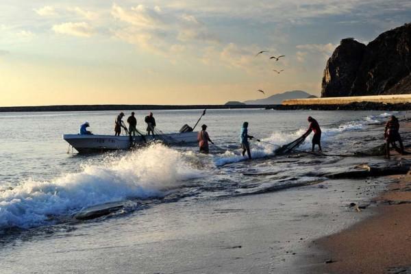 Over 6,000 fishermen in UAE return to sea for new fishing season