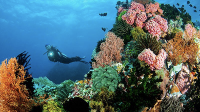 Photo of PH Tourism promotes dive spots, PAL offers luggage allowance for divers