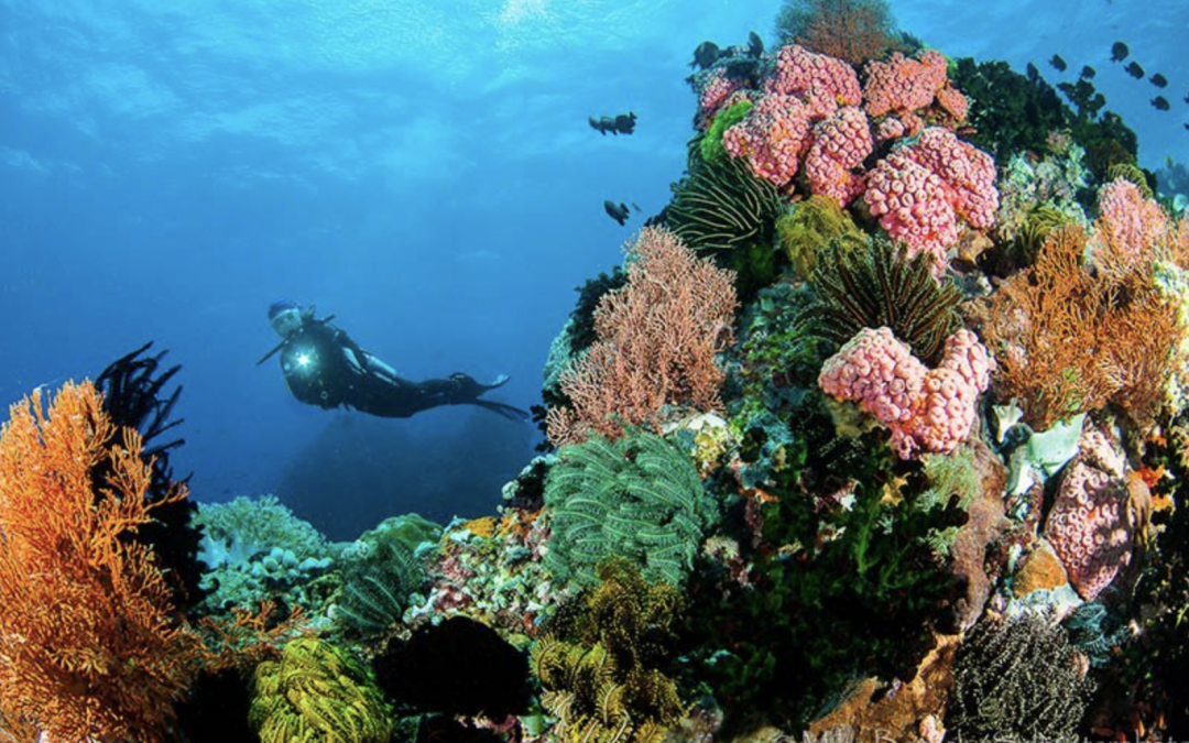 PH Tourism promotes dive spots, PAL offers luggage allowance for divers