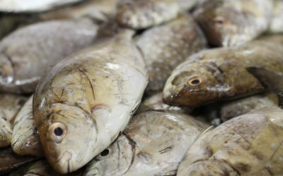 2 fish varieties to be temporarily banned in UAE starting next month
