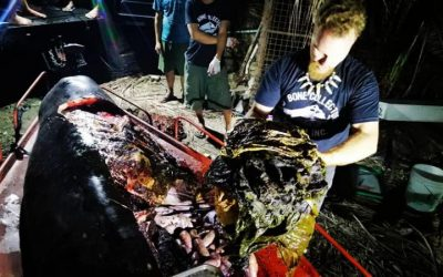 Museum, Greenpeace sound alarm over whale death due to plastic in PH
