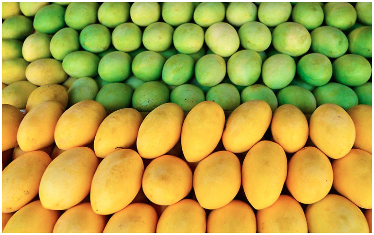 PH to take advantage of P1,000 price per piece of mango in Russia