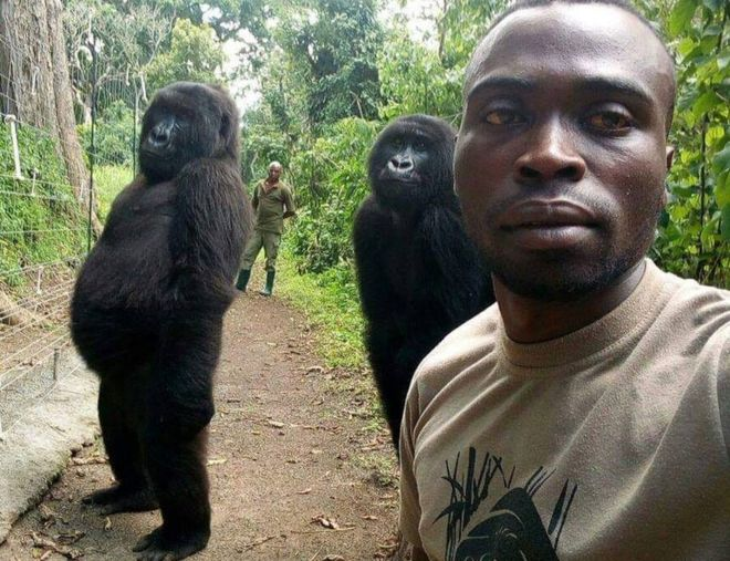 Gorillas pose for a 'selfie' with park ranger