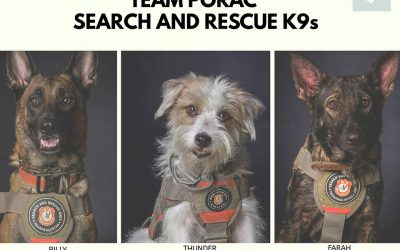 Meet the dogs that helped saved lives at Porac