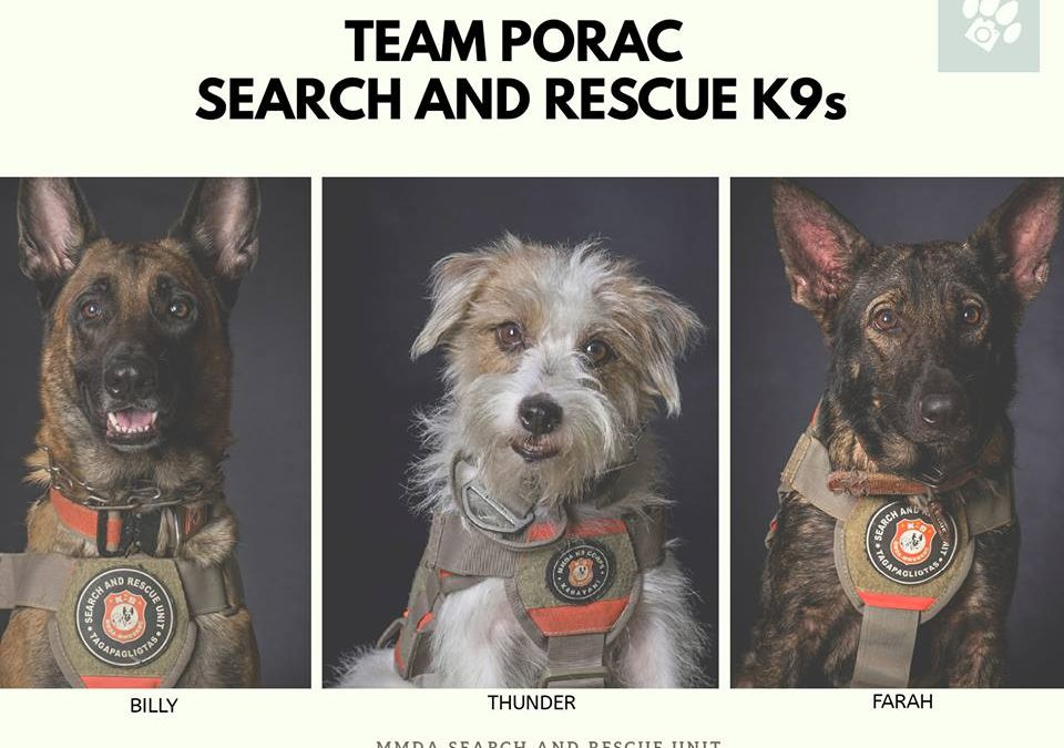 Meet the dogs that helped save lives at Porac