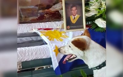 'Pinoy Hachiko' dog waiting for a teacher who passed away goes viral