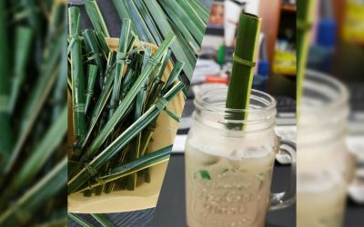 LOOK: Biodegradable straws from café in Siargao goes viral