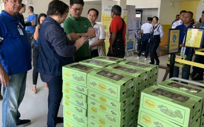 Dubai gets a taste of Isabela mangoes from PH