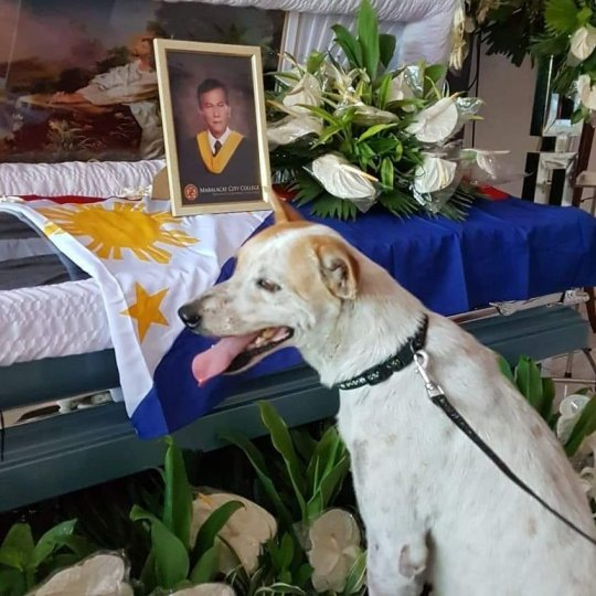 'Buboy' the loyal dog  killed in hit and run accident