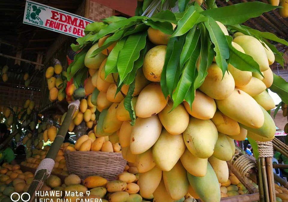 Japanese businessman buys 100,000 kilos of Philippine mangoes