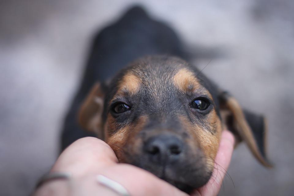 Hong Kong: Dog tests positive for 'low level' coronavirus