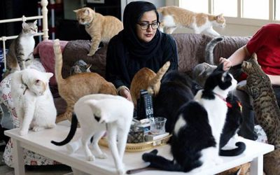 Emirati woman turns home into shelter for 75 adopted cats
