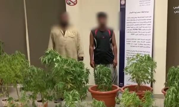 Abu Dhabi Police arrest two men over 37 marijuana plants