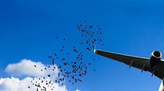 Plane returns to NAIA after bird strike