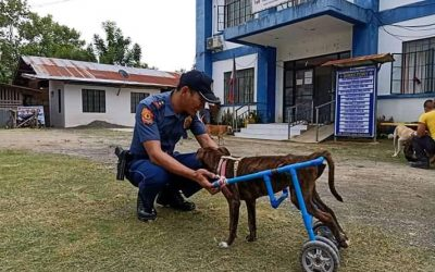 Stray dog gets wheelchair from Bukidnon policeman