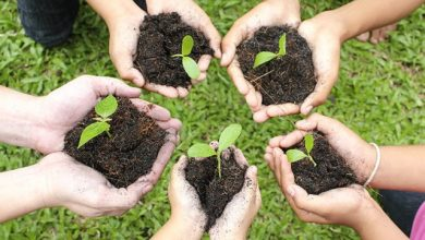 Photo of Tree planting activity marks start of 100-day countdown to SEA Games
