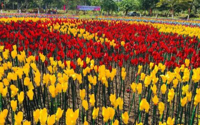 WHERE IN PINAS? Plastic bottles converted into beautiful tulips