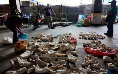 Php36 million worth of giant clams seized in Cebu