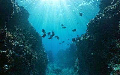 Bahrain opens world's biggest underwater theme park