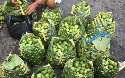 Baskets made of coconut leaves replace plastic bags in Tawi-Tawi