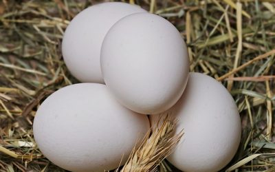 Man in India dies after trying to eat 50 eggs for Dh104 bet
