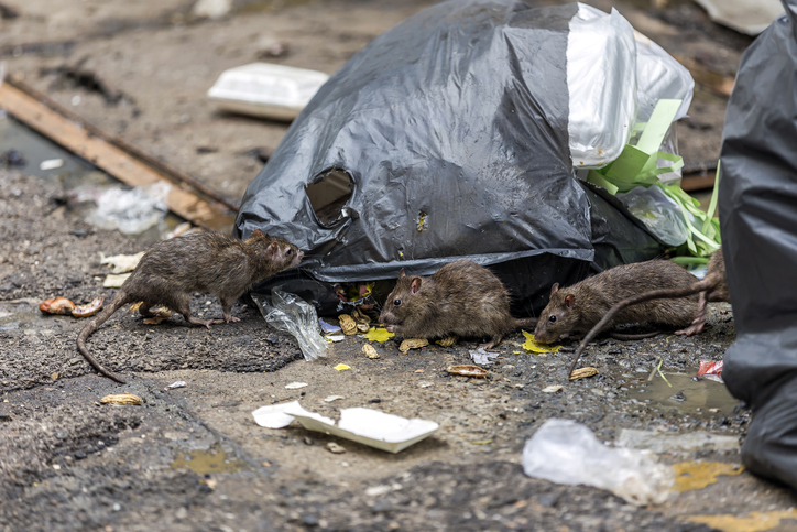 Rats, cockroaches feast on fetus dumped in QC garbage