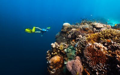 Philippines wins Leading Dive Destination at World Travel Awards